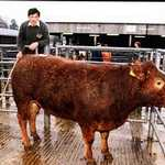 1990s. St. Austell Market. Keith Langmaid with his prize-winning cattle.