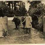1930s. Mixton Farm, Lerryn, a working day. Irving and Vena Hoskin
